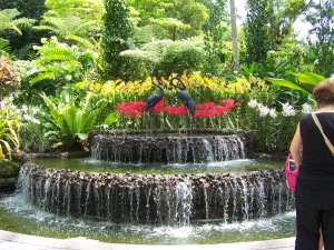 National Orchid Gardens in Singapore
